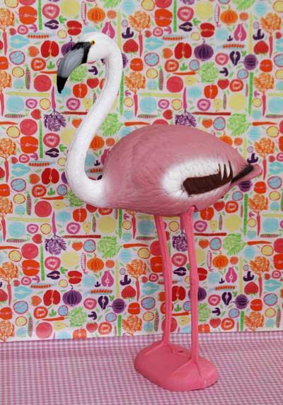 flamingo_rosavit_1